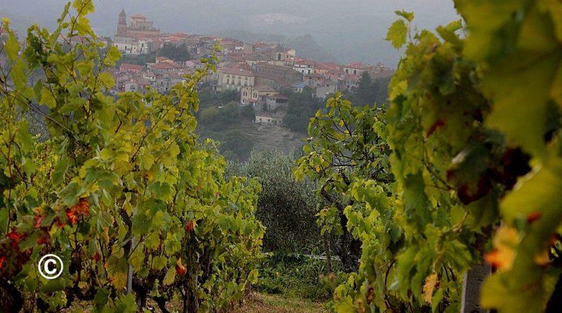 """""""L'uva chiama a raccolta all'imbrunire"""". Iniziativa tra i vigneti della Valle del Savuto"""